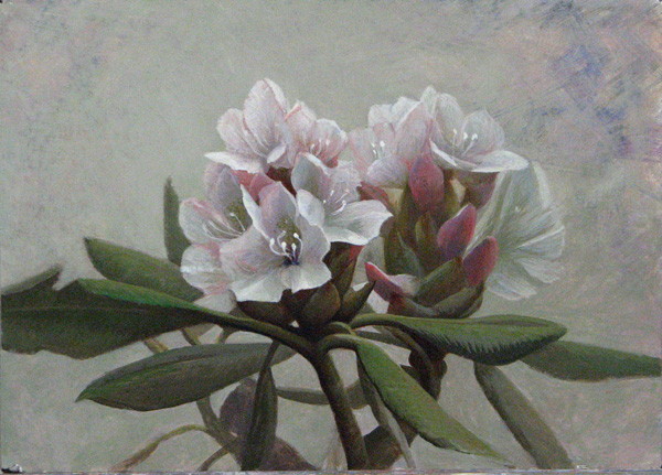 daniel-ambrose-rhododendron.jpg
